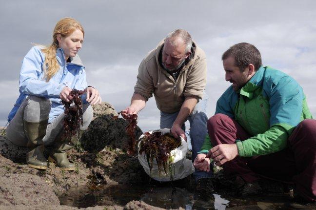 Irish Seaweed Safari